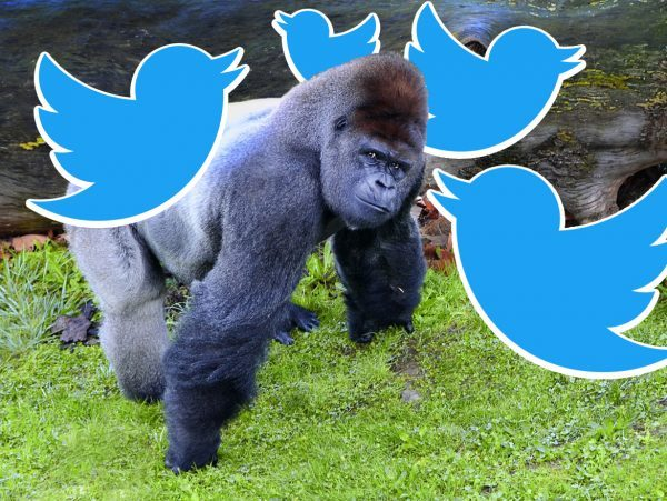 gorilla channel left liberals social media twitter