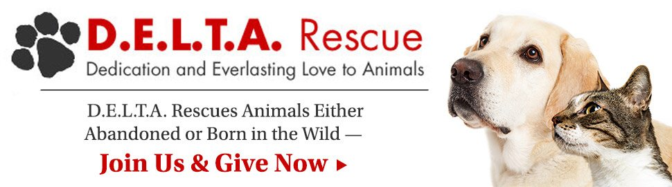 D.E.L.T.A. Rescue | Dedication and Everlast love to Animals.